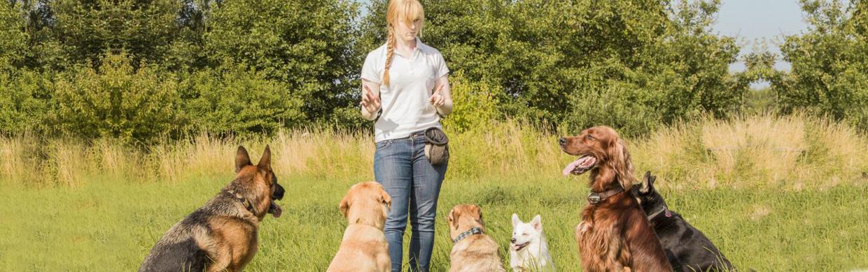 servizi-per-cani-doggy-zen-padova