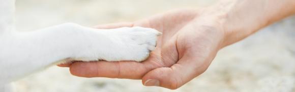 contatti doggy zen padova